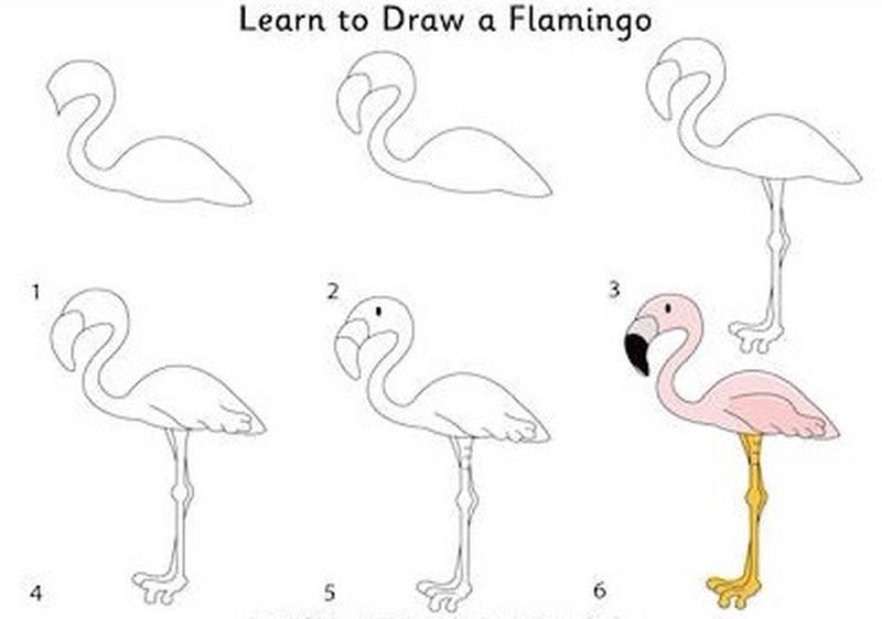 dibujo fácil de animal salvaje a lápiz paso a paso flamenco rosado para colorear