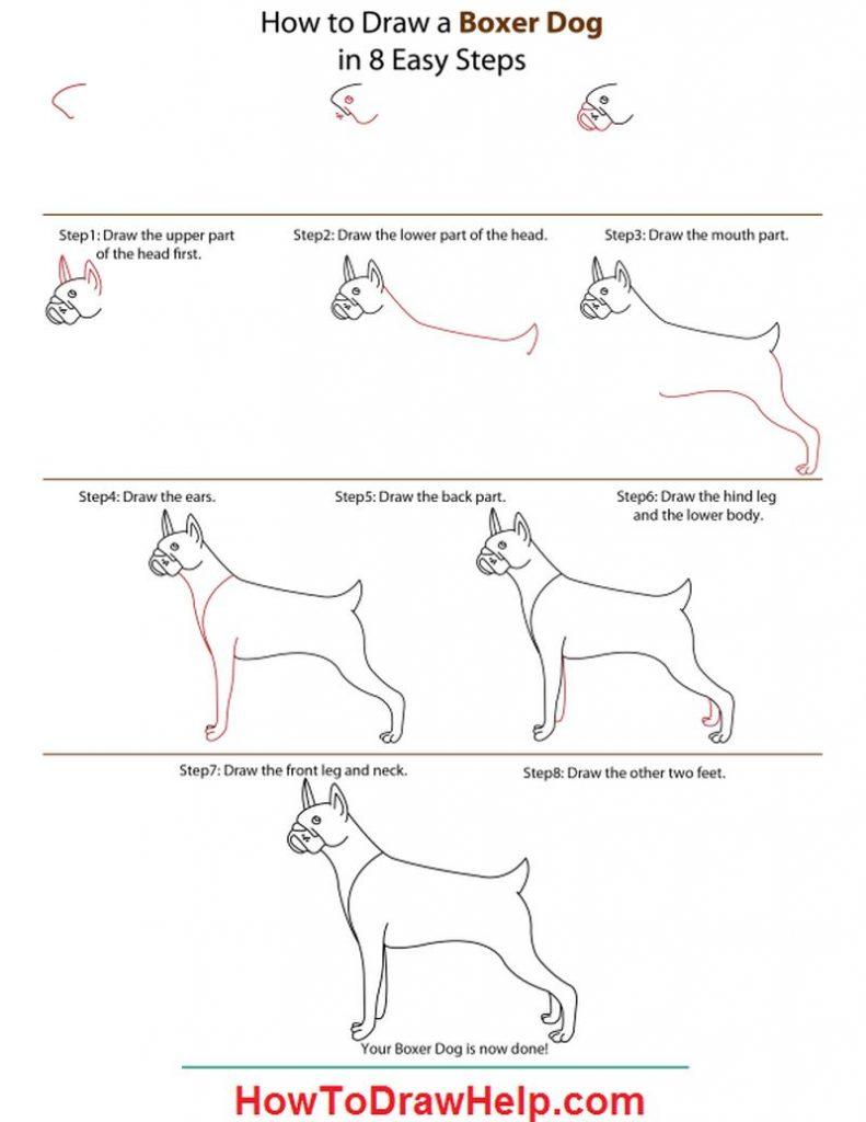 dibujo fácil perro bóxer paso a paso a lápiz para colorear