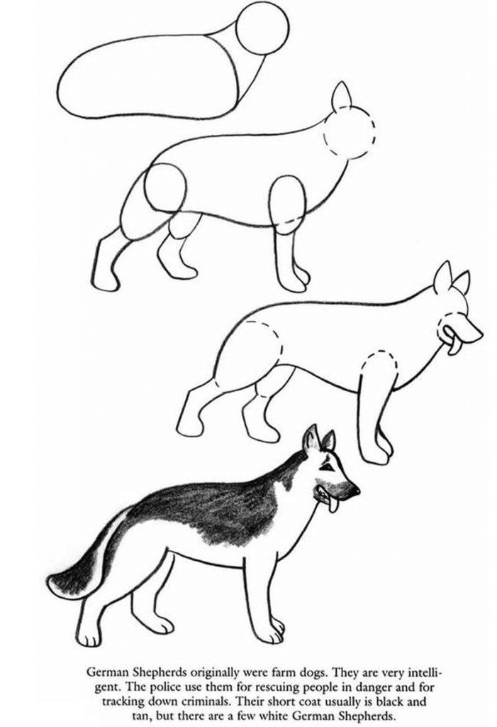 dibujo fácil pastor alemán paso a paso a lápiz para colorear