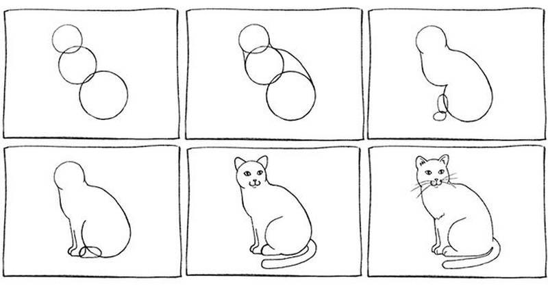 dibujo fácil de animal mascota a lápiz paso a paso gato realista