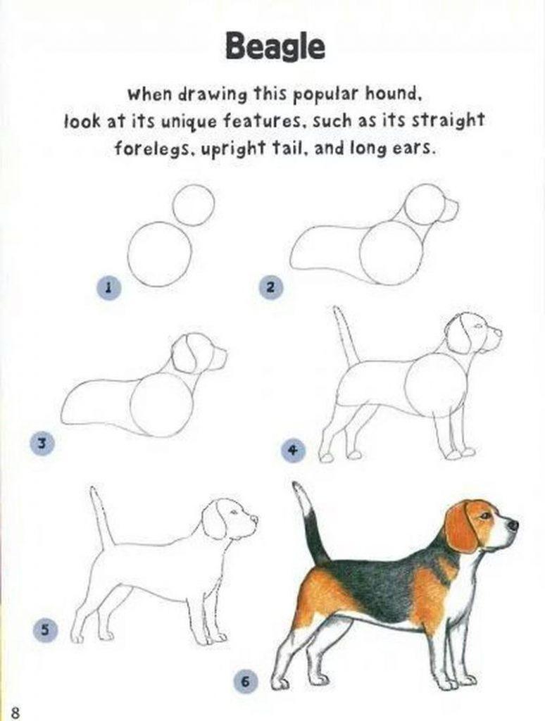 dibujo fácil perro beagle paso a paso a lápiz para colorear