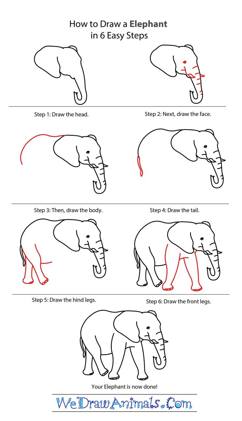 dibujos fáciles de elefantes a lápiz paso a paso para niños elefante realista adulto