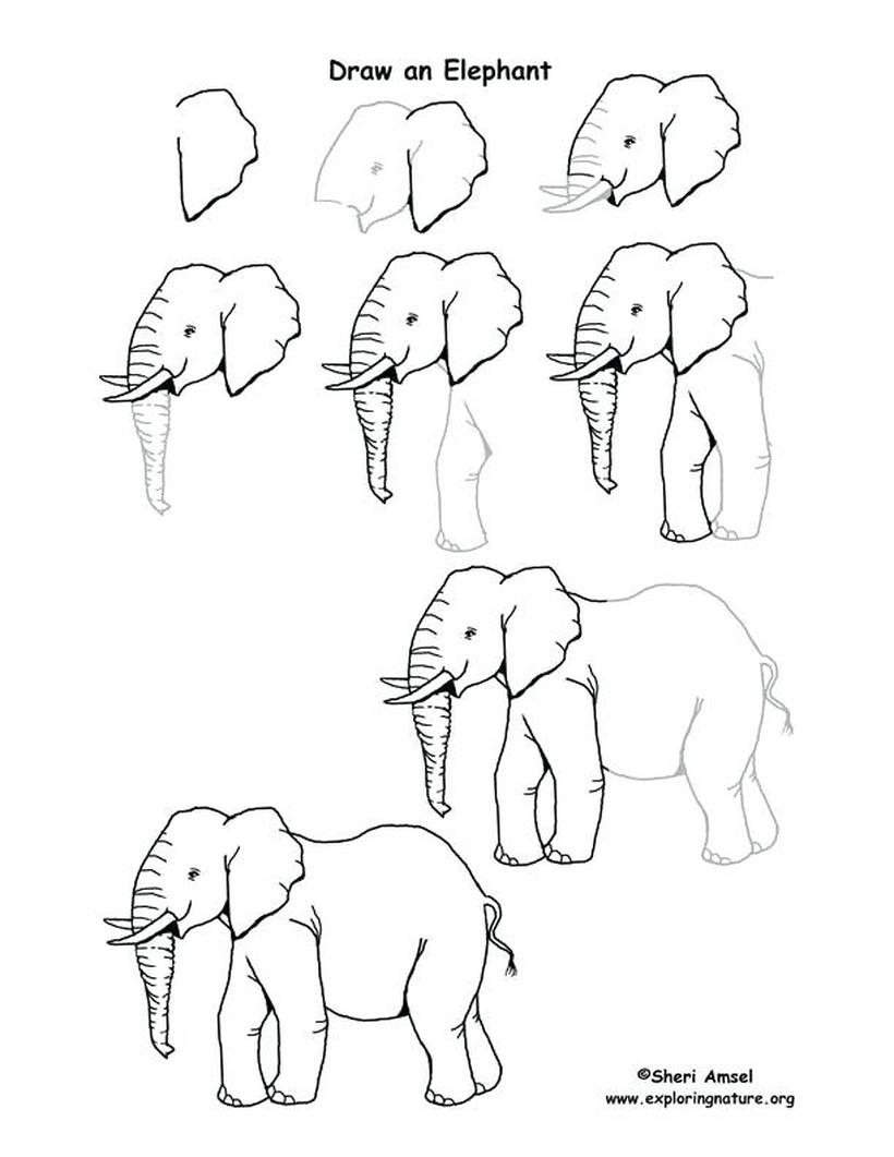dibujos fáciles de elefantes a lápiz paso a paso para niños elefante africano realista adulto