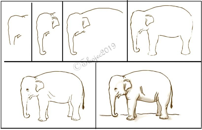 dibujos fáciles de elefantes a lápiz paso a paso para niños elefante asiático