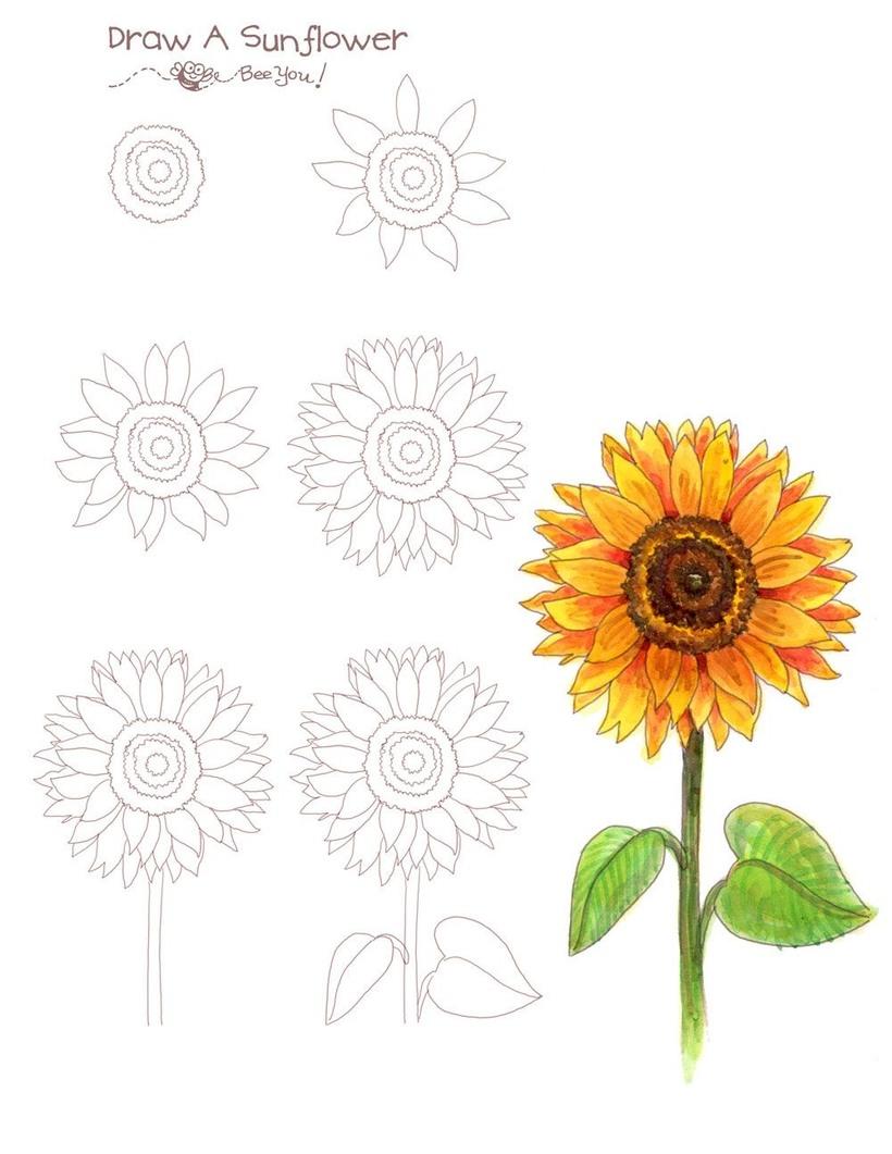 flor girasol dibujos fáciles de girasoles paso a paso para colorear mirasoles