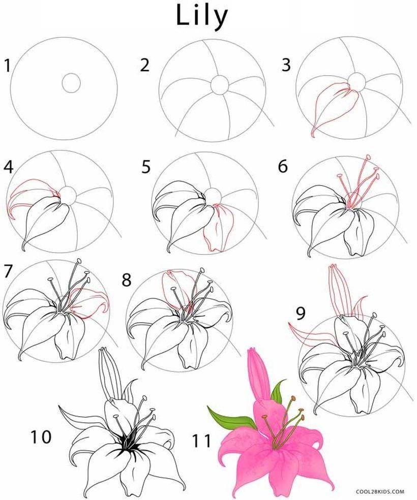 flor de lirio dibujos fáciles de lirios paso a paso para colorear