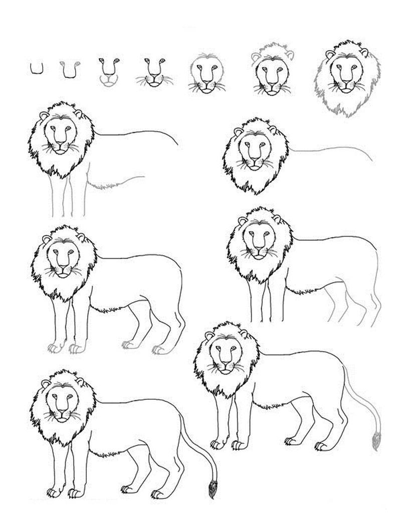 leon leones dibujos faciles 1 2