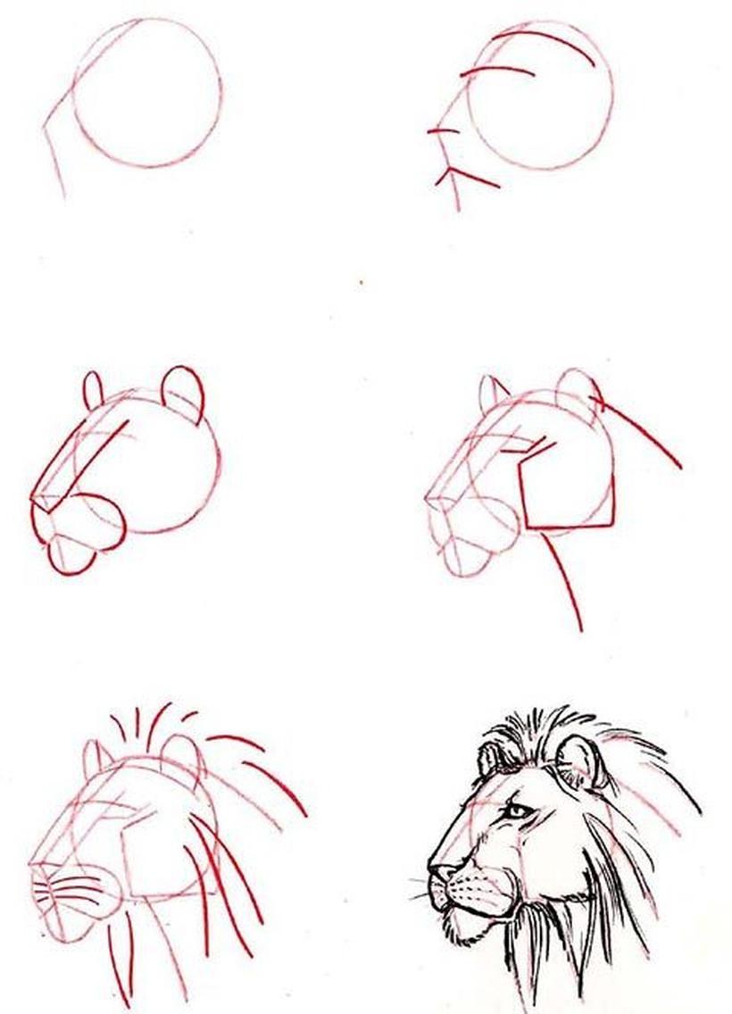 leon leones dibujos faciles 8