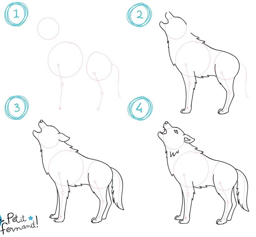 lobo lobos dibujos fáciles de animales para hacer a lápiz con niños paso a paso