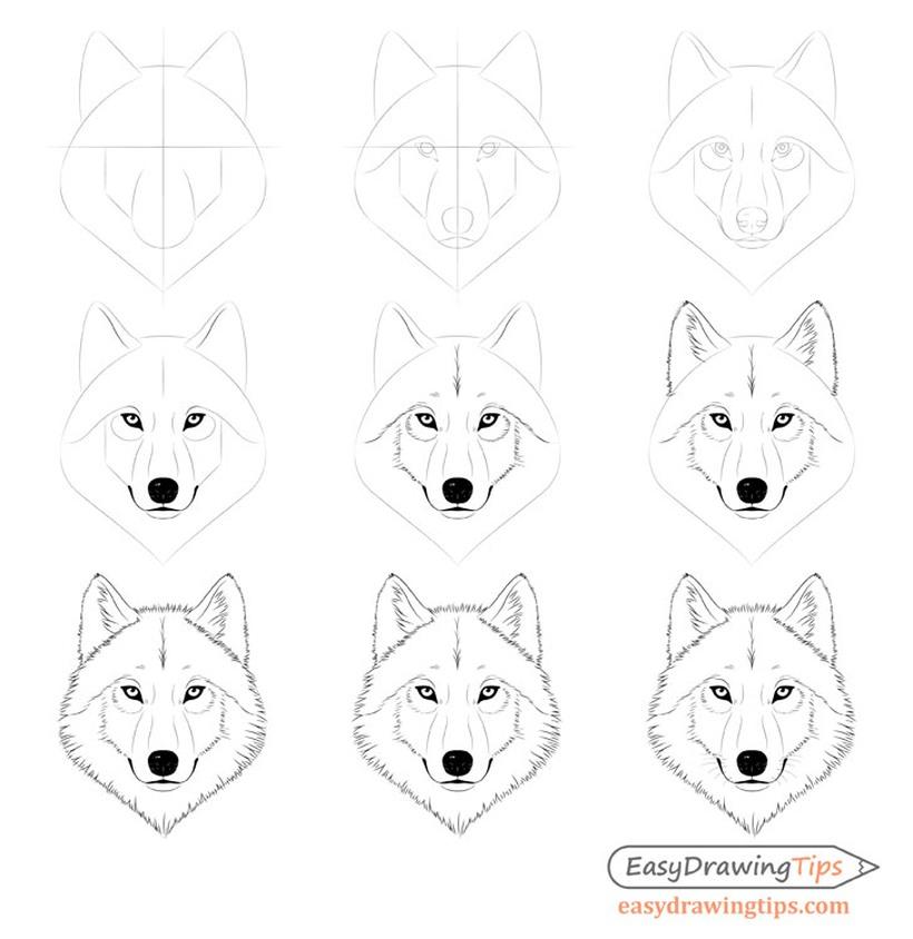 lobo lobos dibujos fáciles de animal salvaje para hacer a lápiz con niños paso a paso