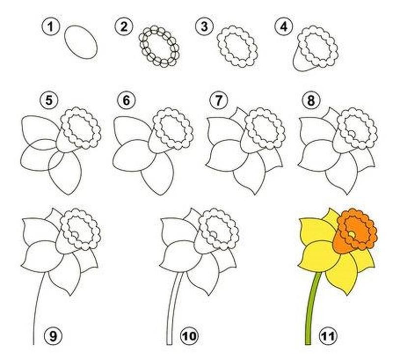 dibujos fáciles de flores de narciso amarillo paso a paso