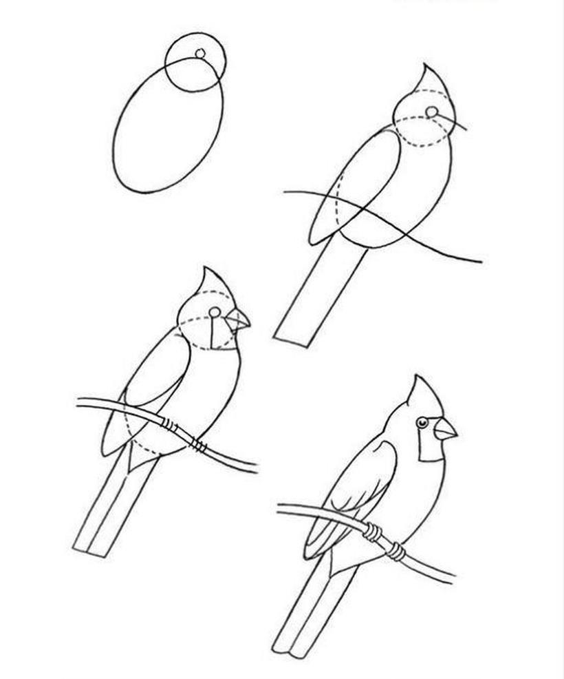 pájaro realista en una rama dibujos fáciles de pájaros aves paso a paso