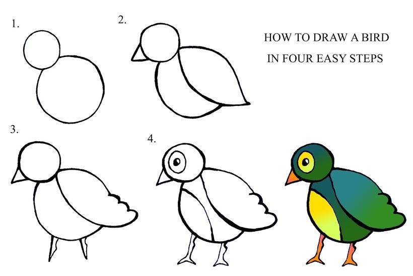 pajarito dibujos fáciles de pájaro aves en pocos pasos a lápiz colorear