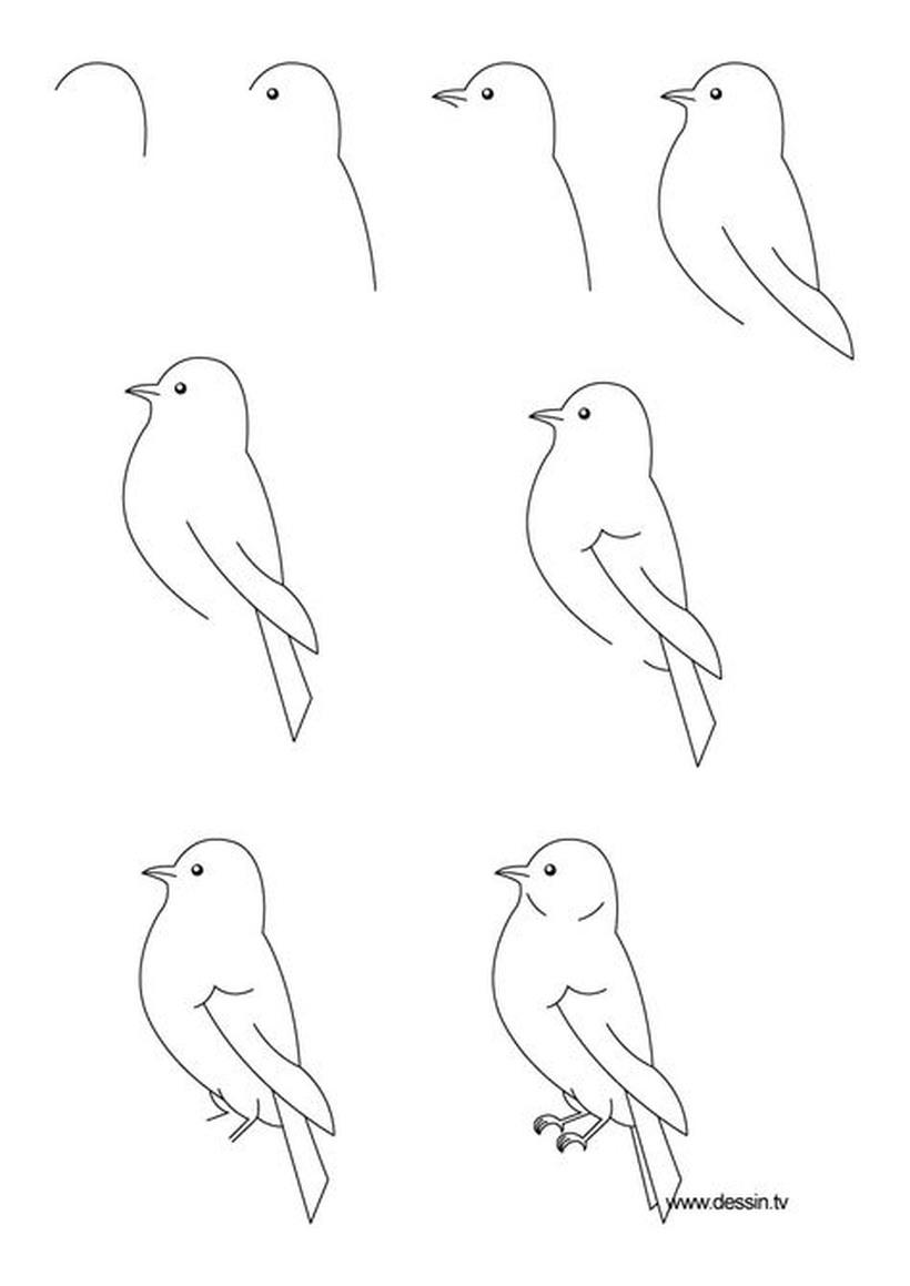 pájaro realista aves pájaros dibujos fáciles guías instrucciones pasos