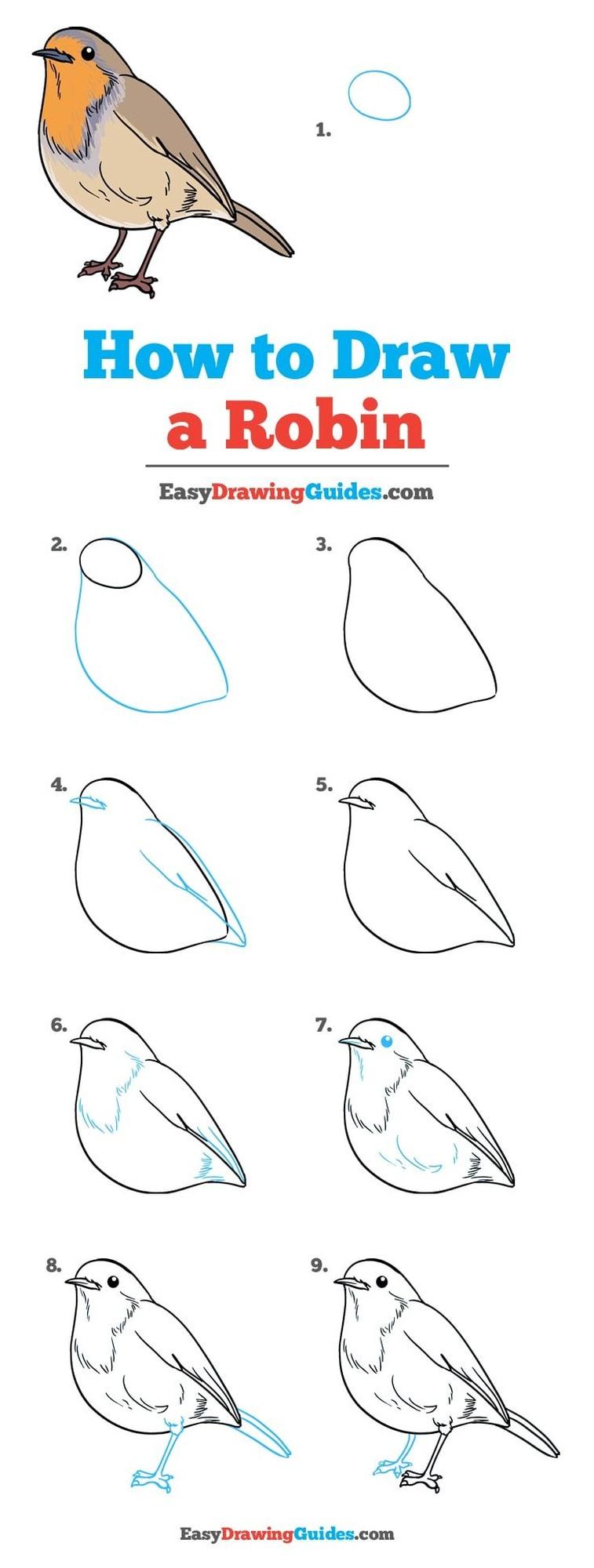 pájaro petirrojo realista dibujos fáciles de pájaros aves paso a paso
