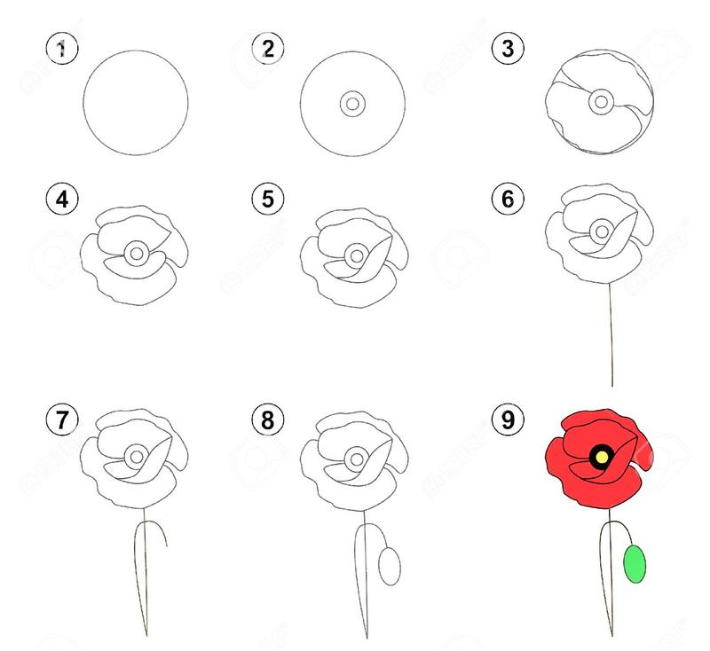 dibujos fáciles de flores de amapola  paso a paso para pintar