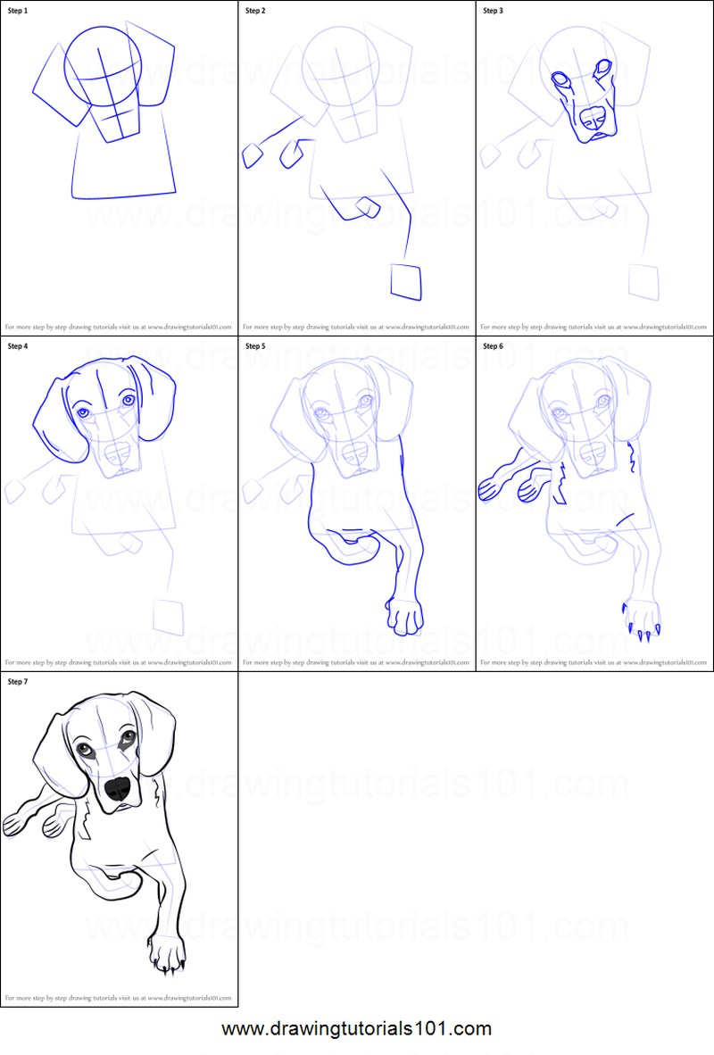 perro realista sentado dibujar paso a paso a lápiz