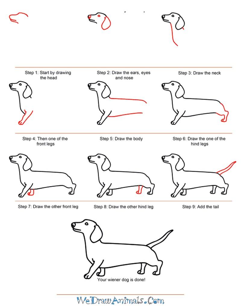 perros salchicha realistas dibujos  paso a paso