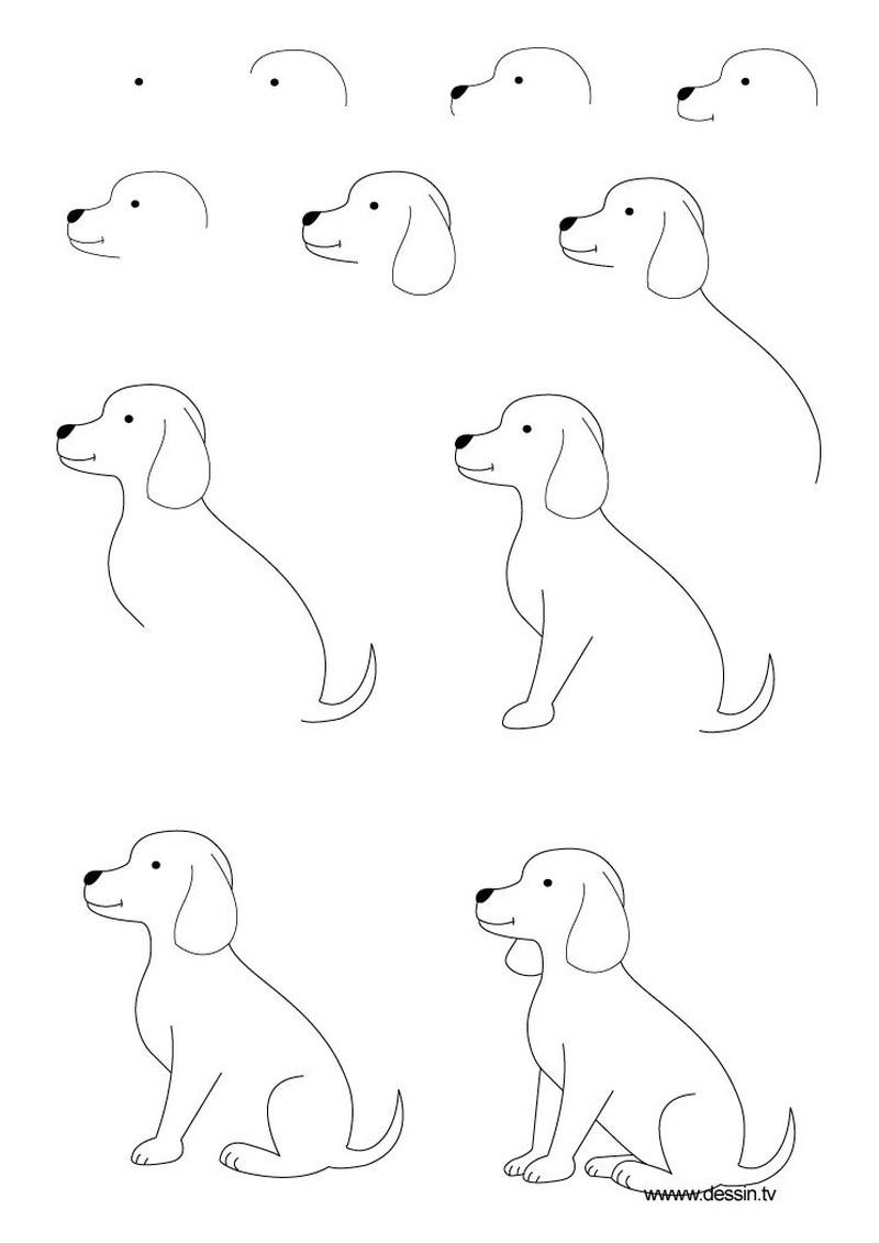 perro realista sentado dibujar paso a paso 2