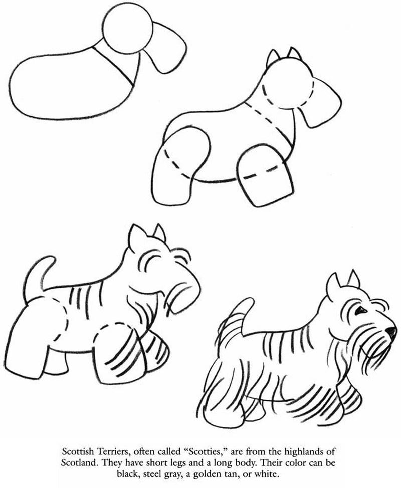 perro terrier realista dibujos fáciles paso a paso a lápiz