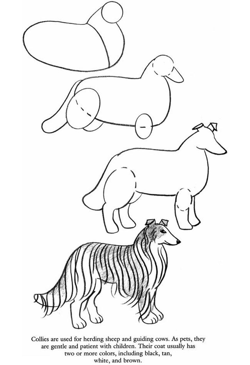 perro collie realista dibujos fáciles paso a paso a lápiz