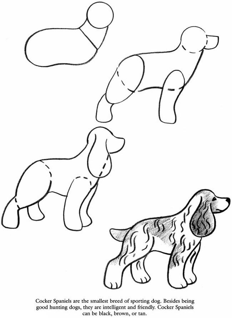 perro cocker realista dibujos fáciles paso a paso a lápiz