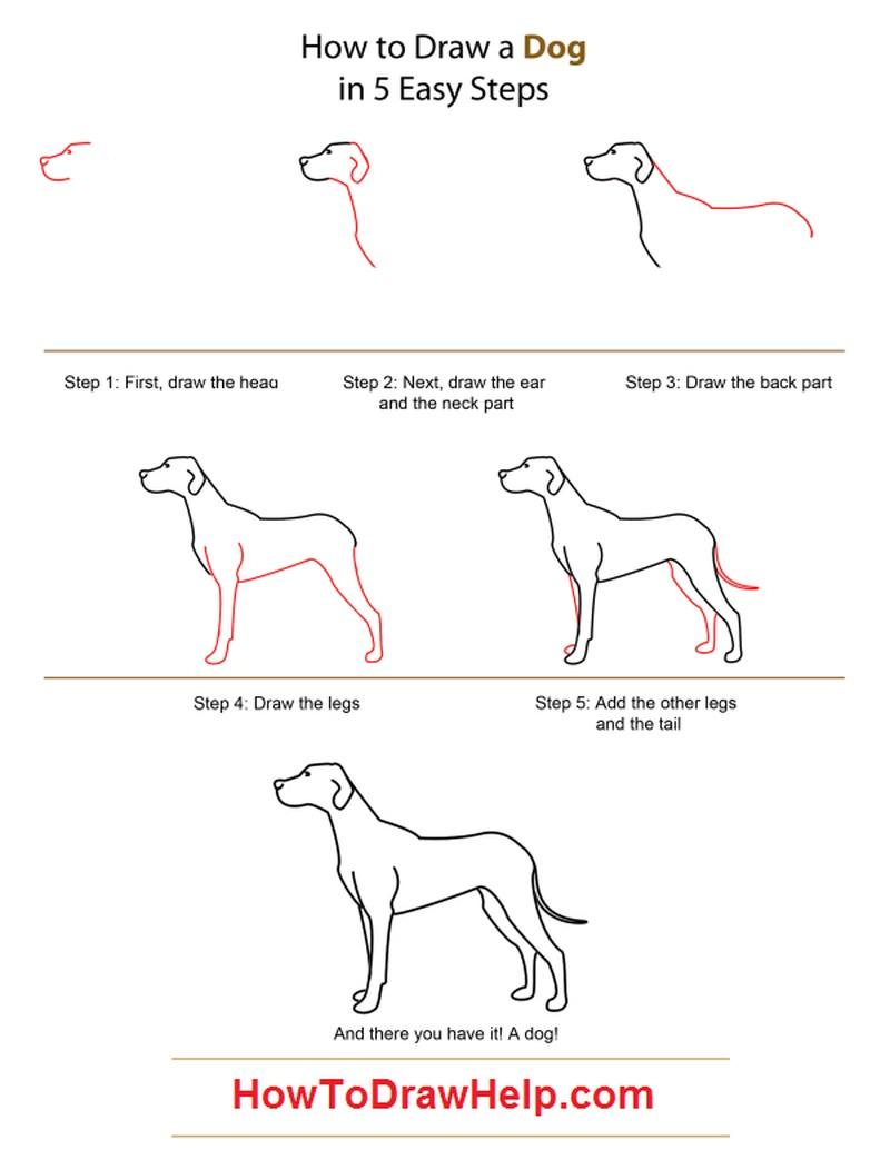 perros reales dibujar paso a paso a lápiz