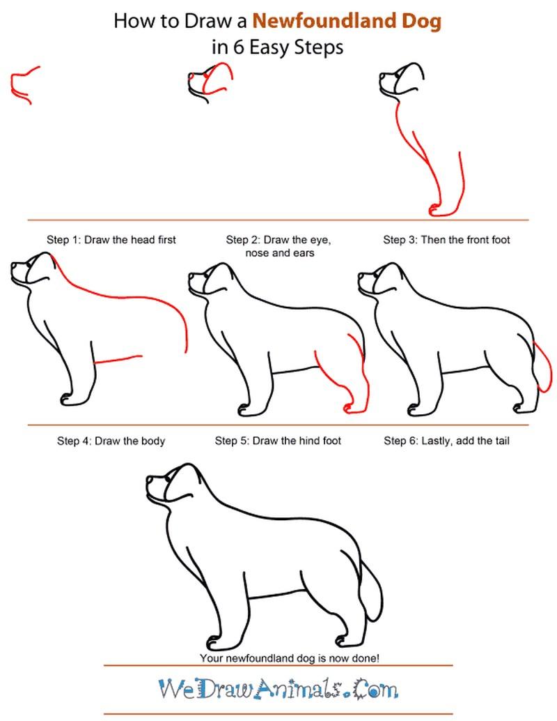 perros grandes realistas dibujar paso a paso