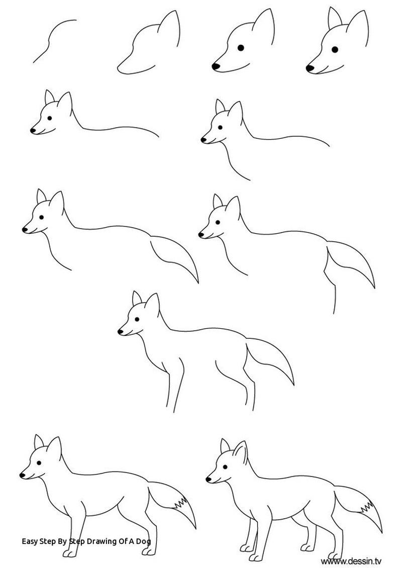 perros reales dibujar paso a paso guía